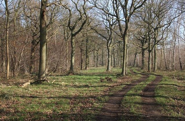 Fulnetby Wood
