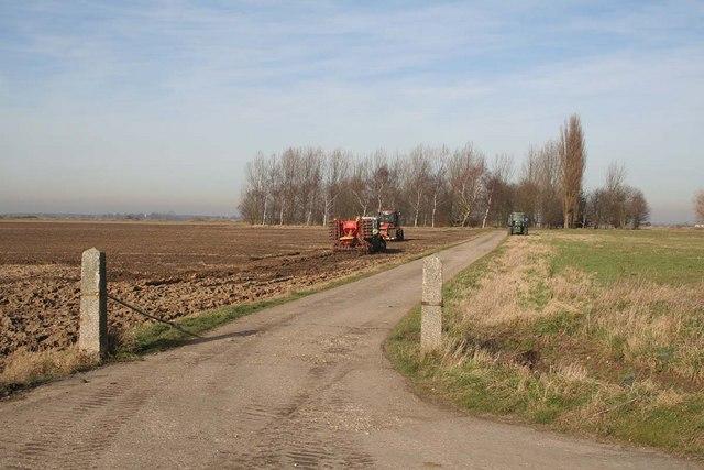 Lincolnshire Farmland near Holton