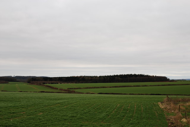 View towards Little Almer Wood