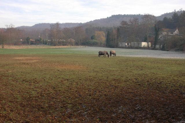 Horse paddock at Kingsford
