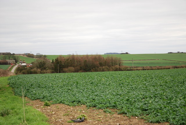 Farmland between Field and Middle Dairies