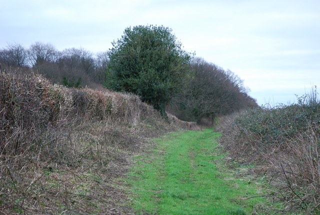Track to Westley Wood