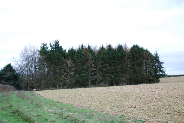 Small copse opposite Westley Wood