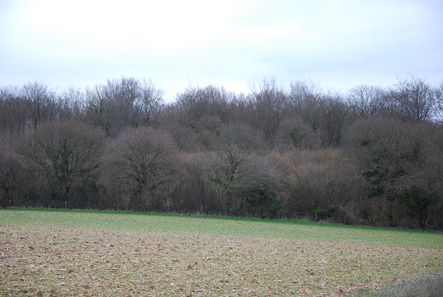 Edge of Westley Wood