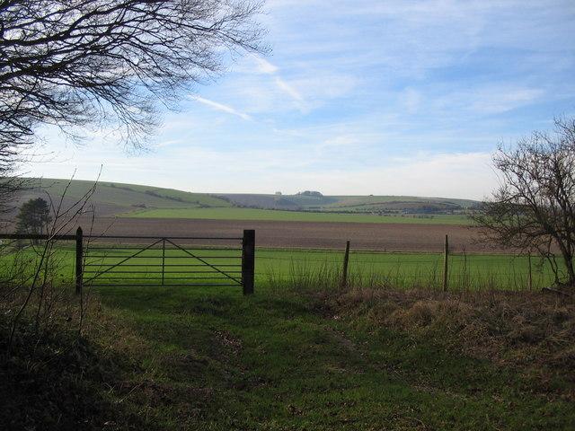 Wiltshire Farmland