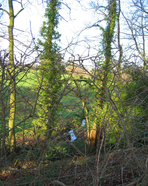 Band of woodland and stream, Bradley Lane