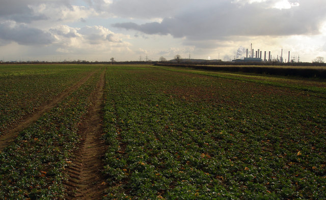 A Very Muddy Field