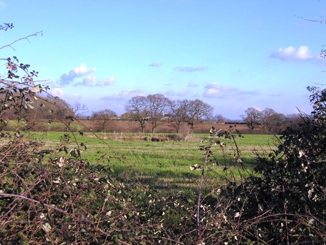 Farmland and Pond