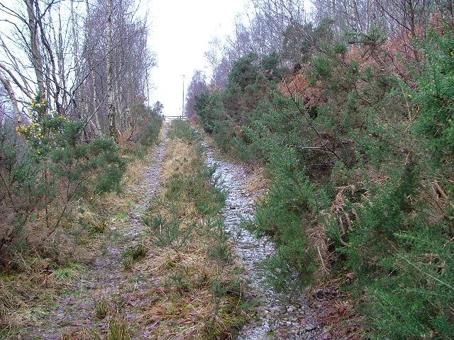 Woodland Track in Glen Spean