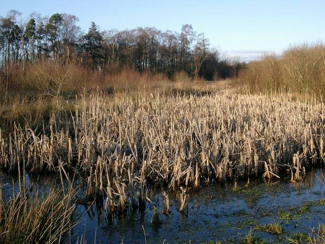 Wetlands at the Whitehill Colliery Woodland
