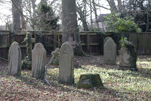 Graves invaded by ivy, Stetchworth, Cambridgeshire
