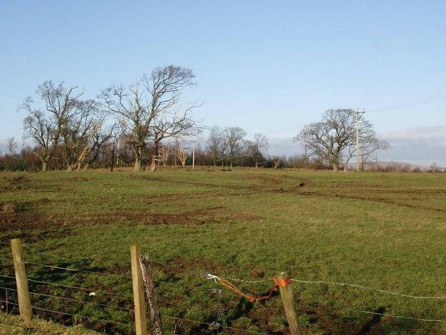 Scruffy pasture, scrubby woodland