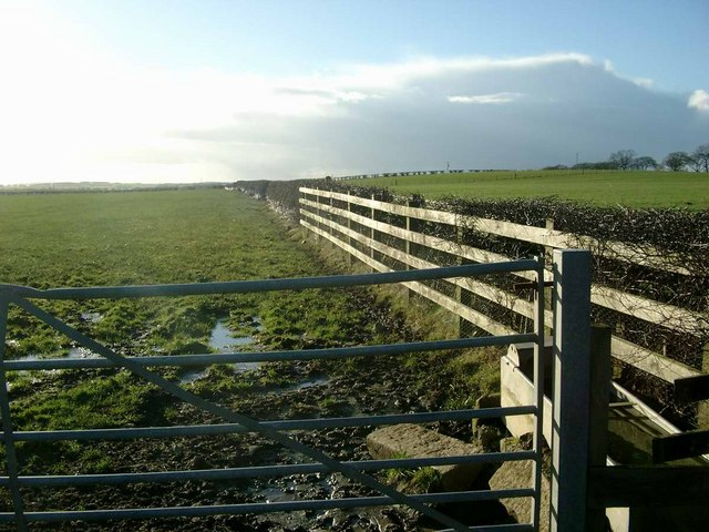 Gate, fence and hedge by the A76