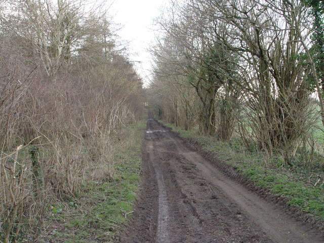 Bridleway to the NE side of Rendezvous Plantation