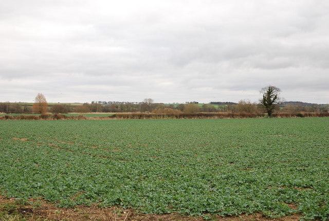 View over farmland towards River Stour