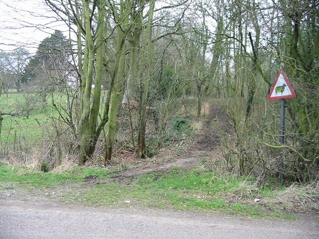 Track through the woods, Wheelbarrow Town
