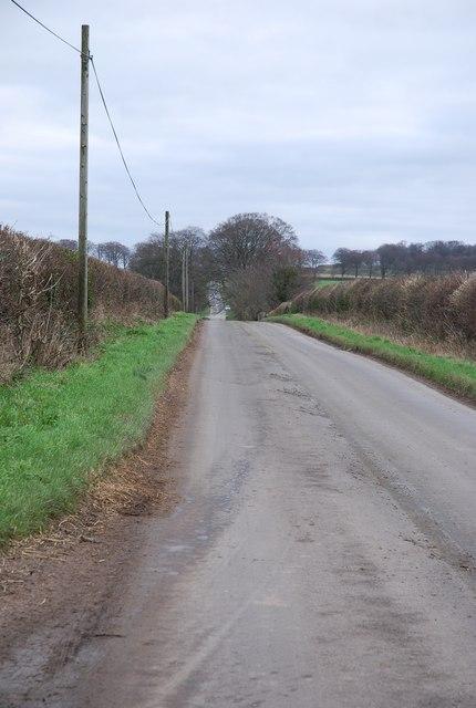 Roman Road to Badbury Rings from Shapwick