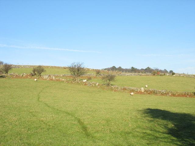 Footpath across sheep pastures