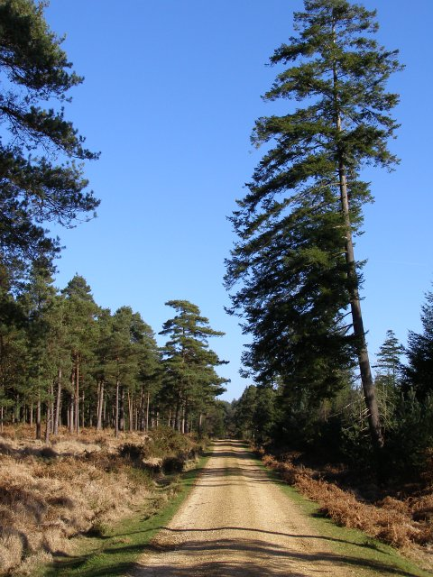 Gravel track in Milkham Inclosure, New Forest