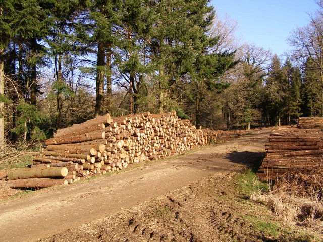 Timber stack in Roe Inclosure, New Forest