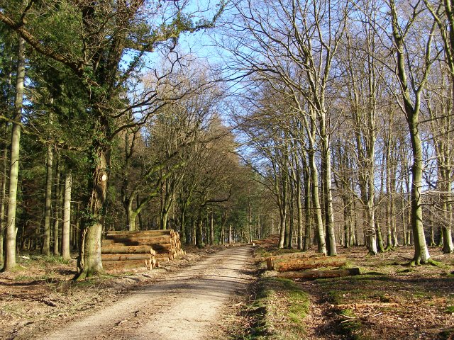 Gravel track in Roe Inclosure, New Forest