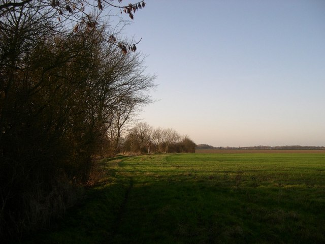 Footpath and field boundary