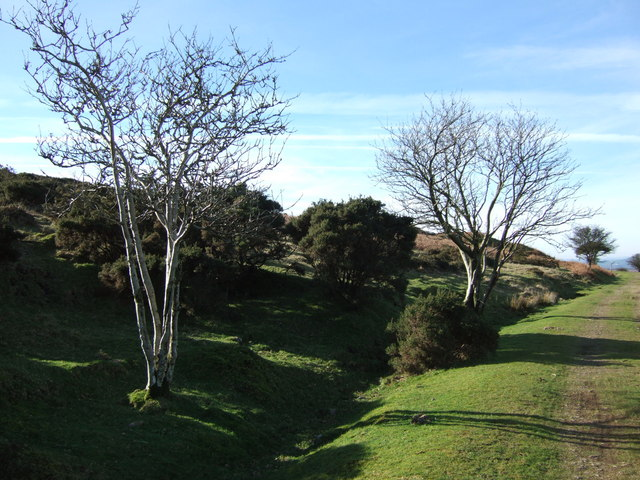 Trees and gorse by the Princetown Railway