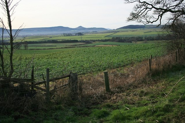 View to Roseberry Topping