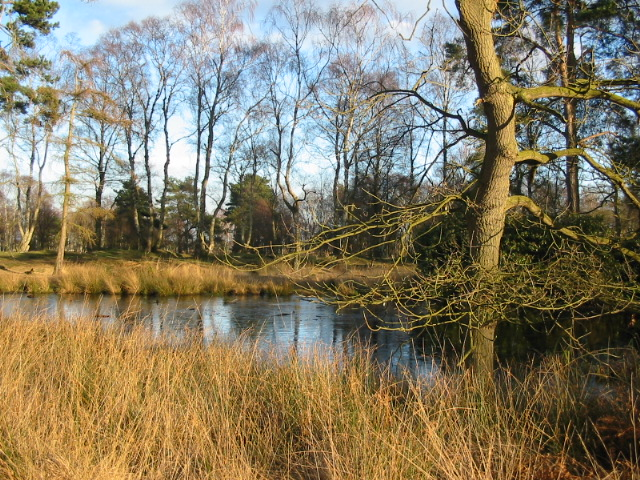 Melting ice on pond at Strensall Common