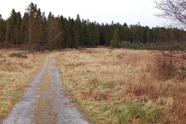 Track in Bin Forest