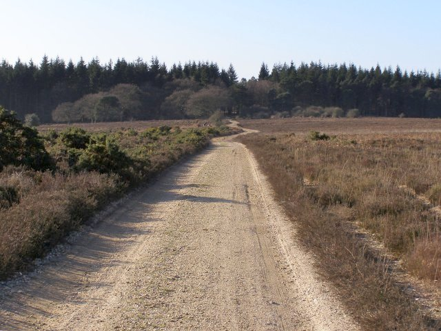 Gravel track to Roe Inclosure, Bratley Plain, New Forest