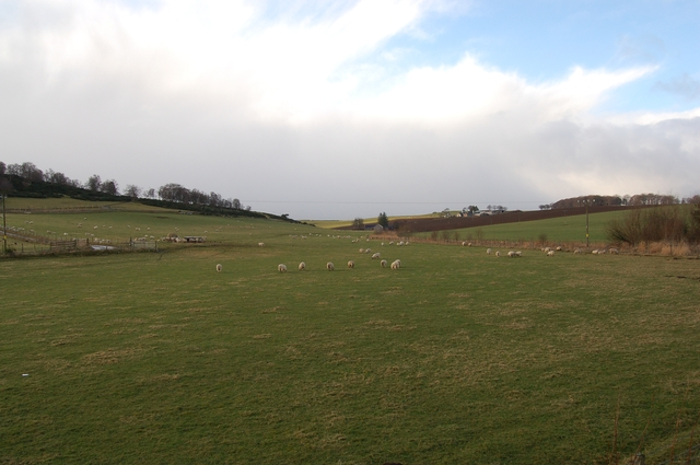 Sheep grazing at Pitmachie