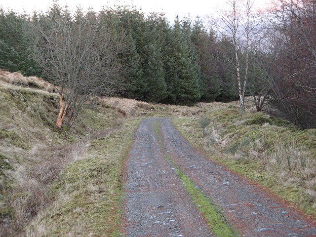 Forest road, Clashgour.