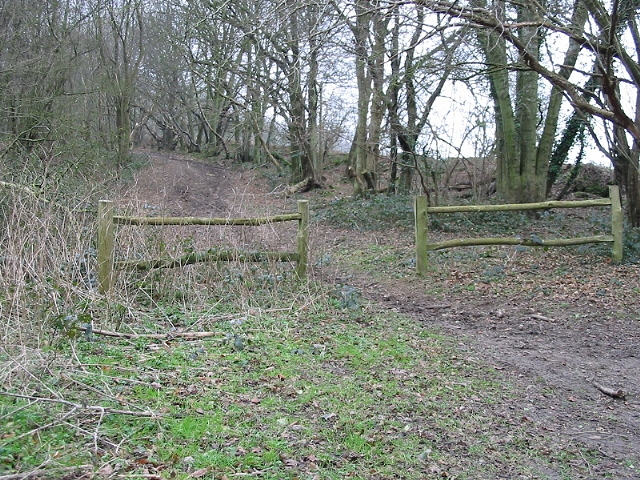 Bridleway heading west into Covert Wood