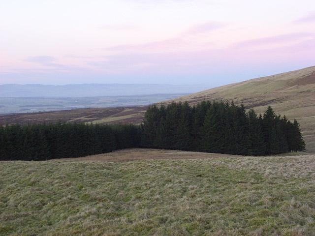 Forestry, Glentye Hill