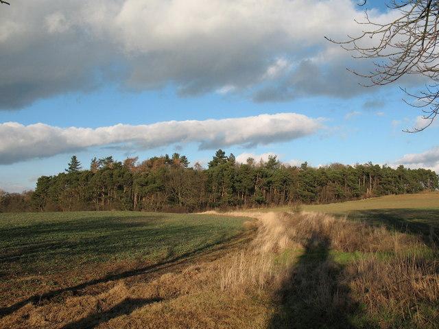 New Covert plantation near Thirn.
