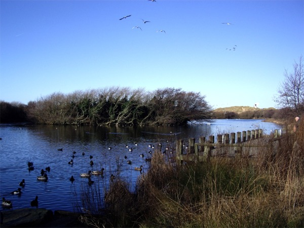 Nature reserve, Ainsdale
