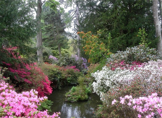 Streamside azaleas, Bodnant Garden