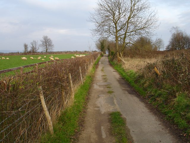 Track to Allington