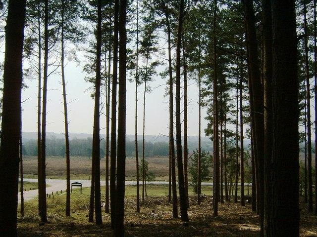 Pine View, Marchwood Inclosure
