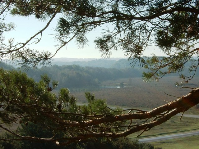 View from Marchwood Inclosure Pines