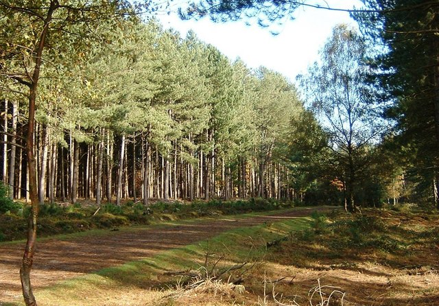 Forest Walk, Marchwood Inclosure