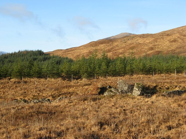 Clashgour forestry