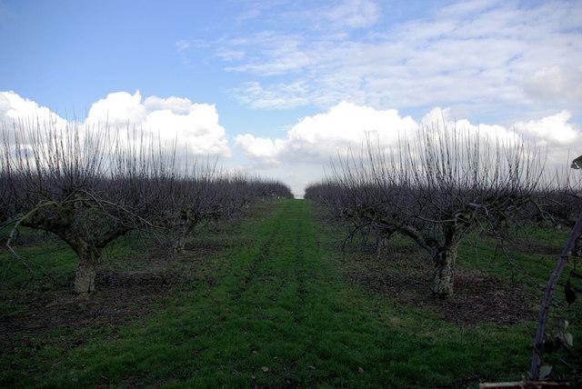 Orchard, Bewley Lane