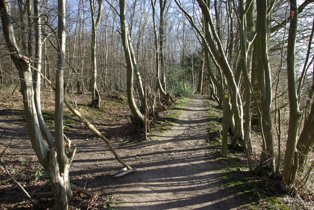 Footpath Junction, Clearhedges Wood