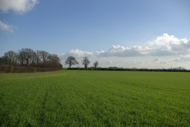 Field by Frith Wood