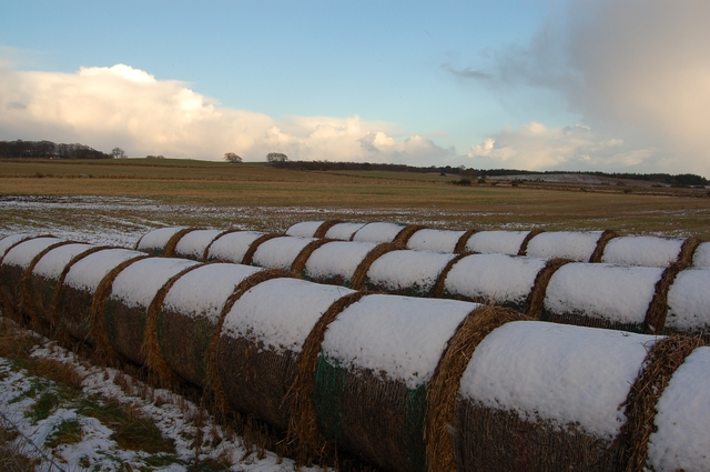 Snow-capped bales