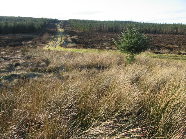 Forest track at South Feeshie Burn