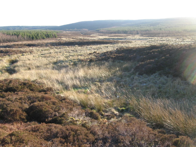 South Feeshie Burn at Rough Moss