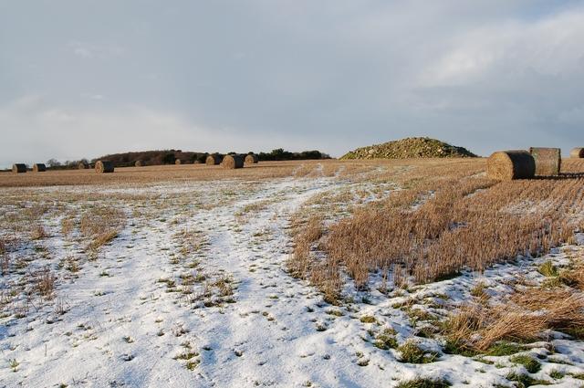 Fields at Westside